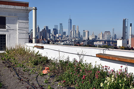 brooklyn-grange-rooftop-07x72