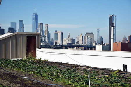 brooklyn-grange-rooftop-13x72