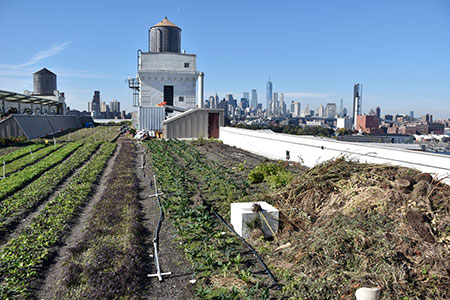 brooklyn-grange-rooftop-14x72