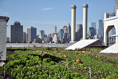 brooklyn-grange-rooftop-19x72